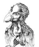 Harpye
