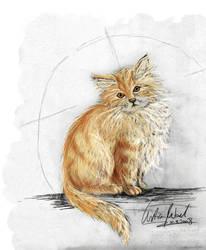 norwegische waldkatze2 by ElvensDay
