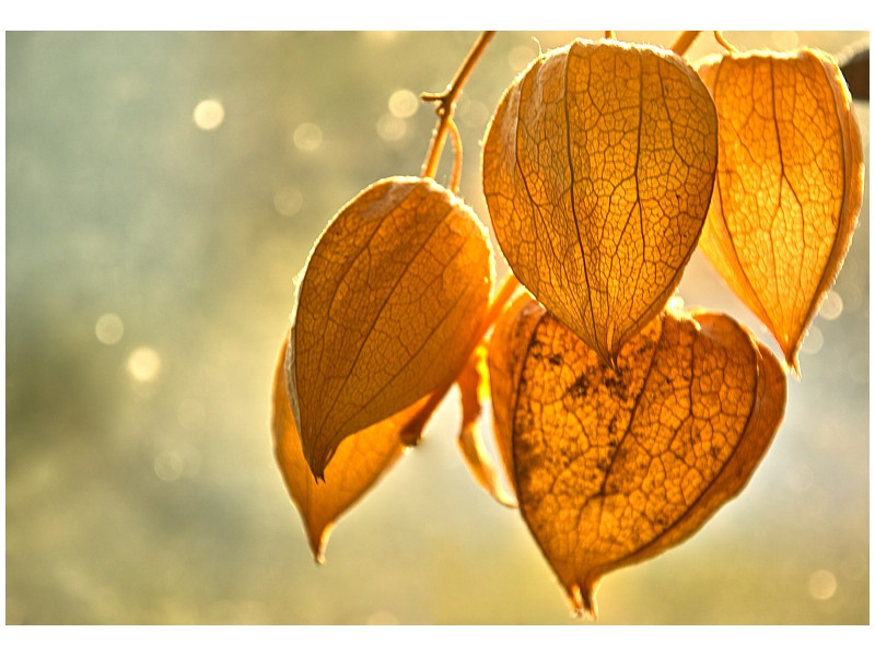 Warm Sun by gregorland