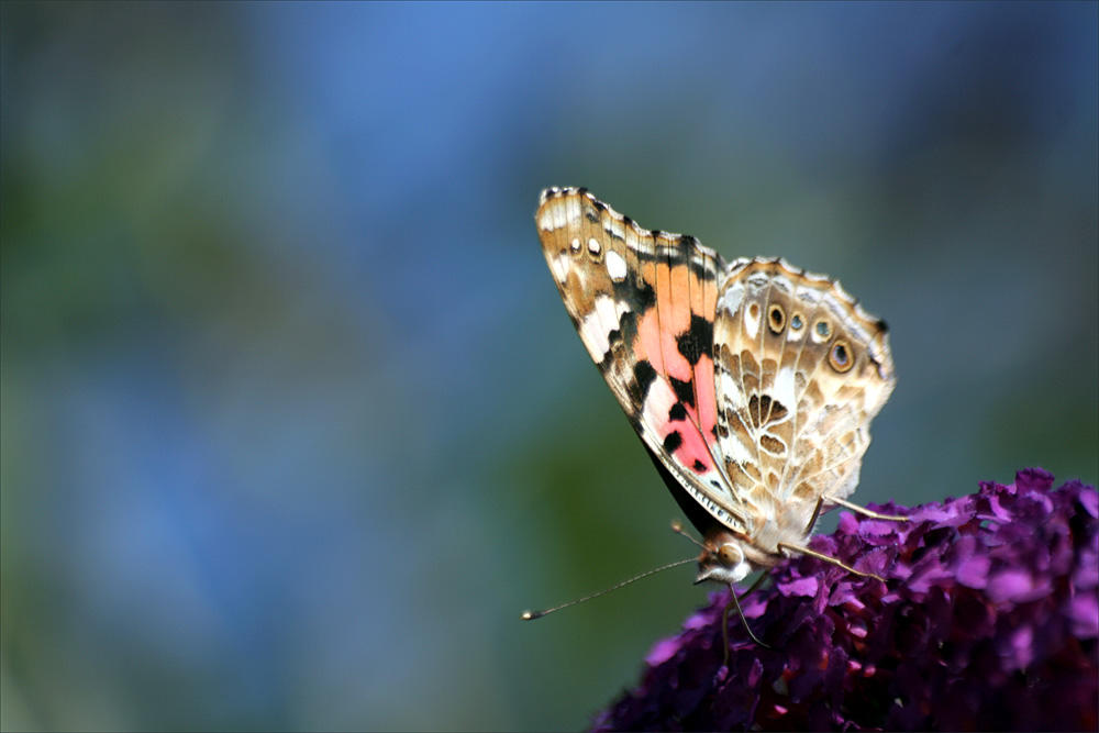 Butterfly flying away - photo#42
