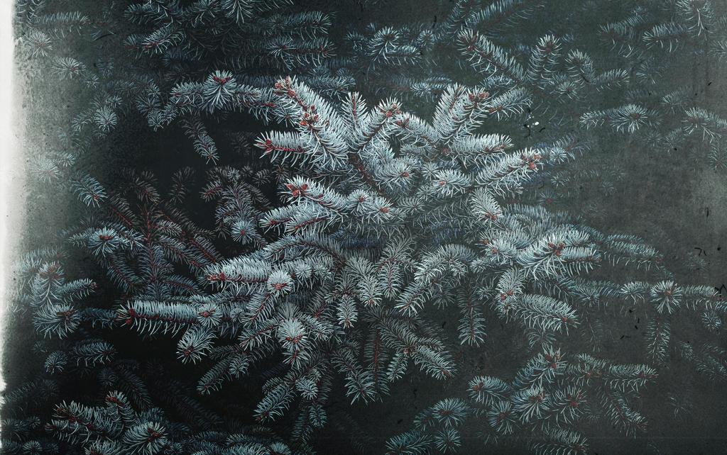 Frozen Nature by kaikajukiri