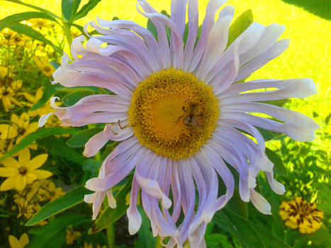 The Bee and the Flower