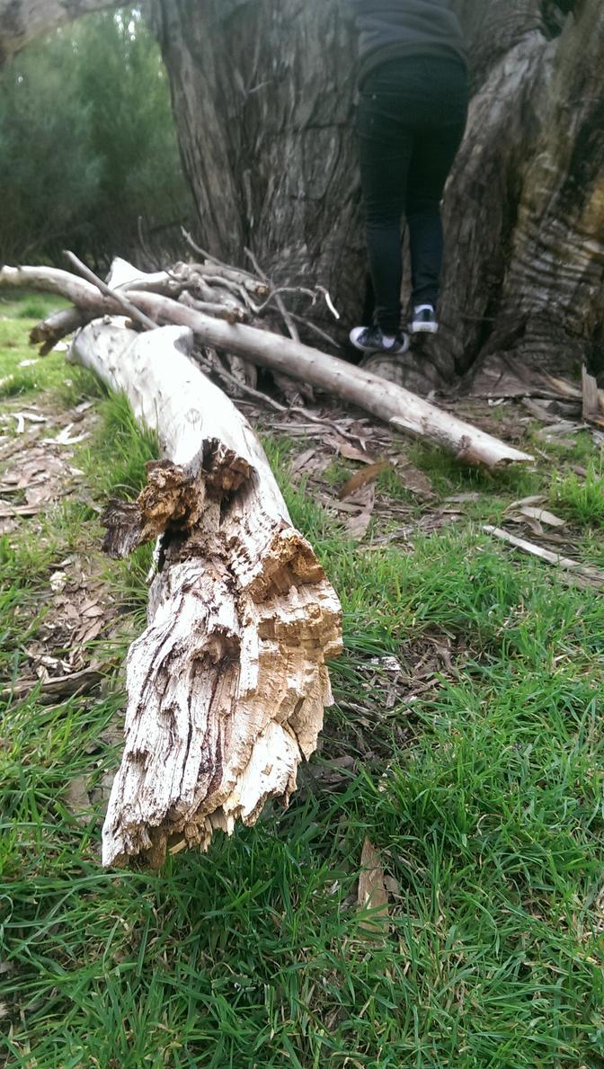 Log by TasmanianDevilzz