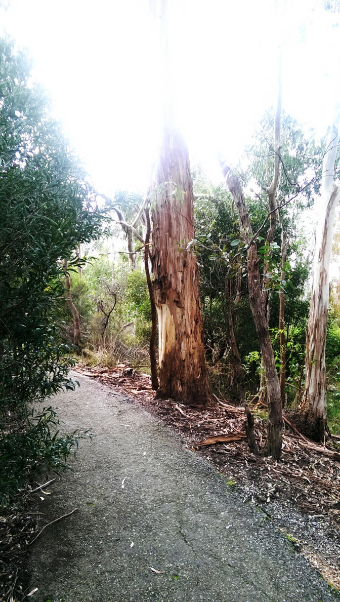 Pathway by TasmanianDevilzz