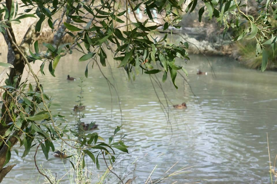 Duckies In A Pool by TasmanianDevilzz