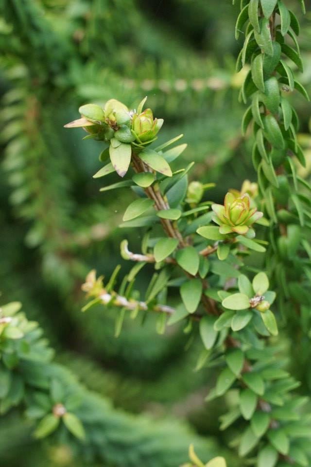 Tree plant thingy by TasmanianDevilzz