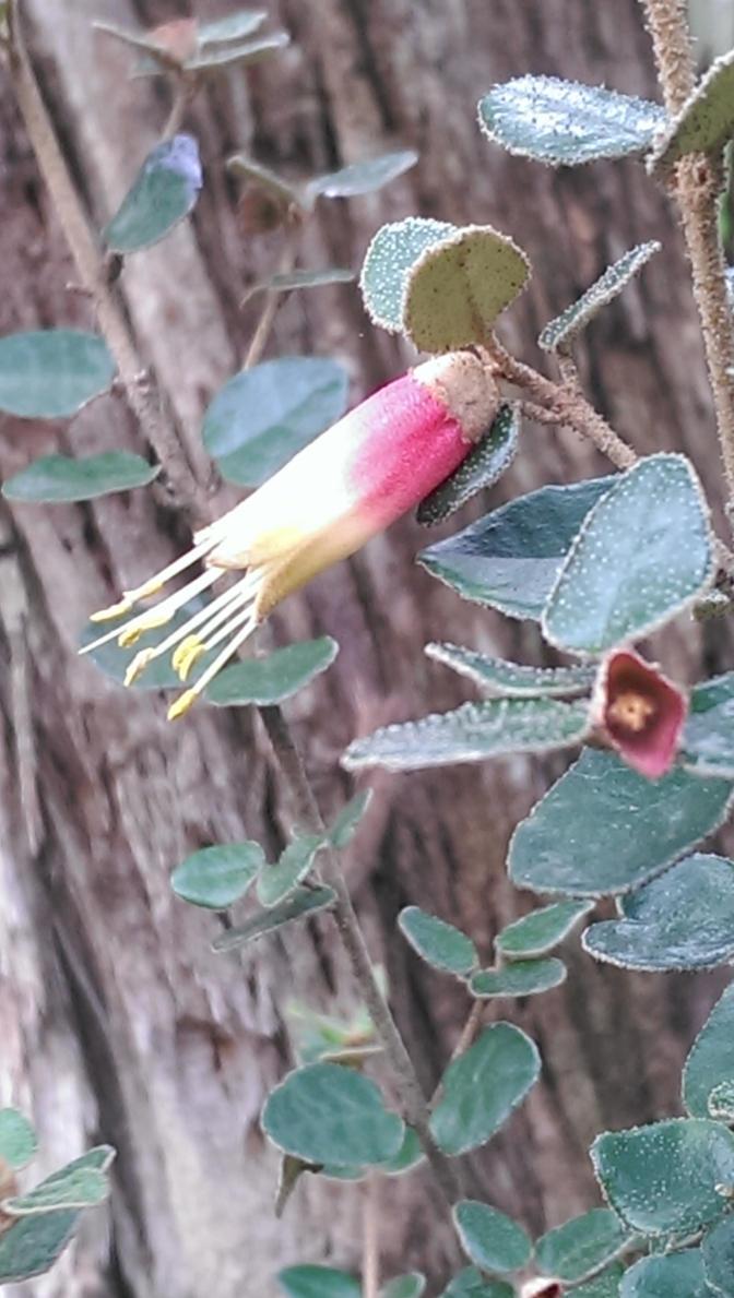 Bell Flower by TasmanianDevilzz