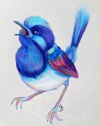 Superb Fairywren by ImmortalTanuki