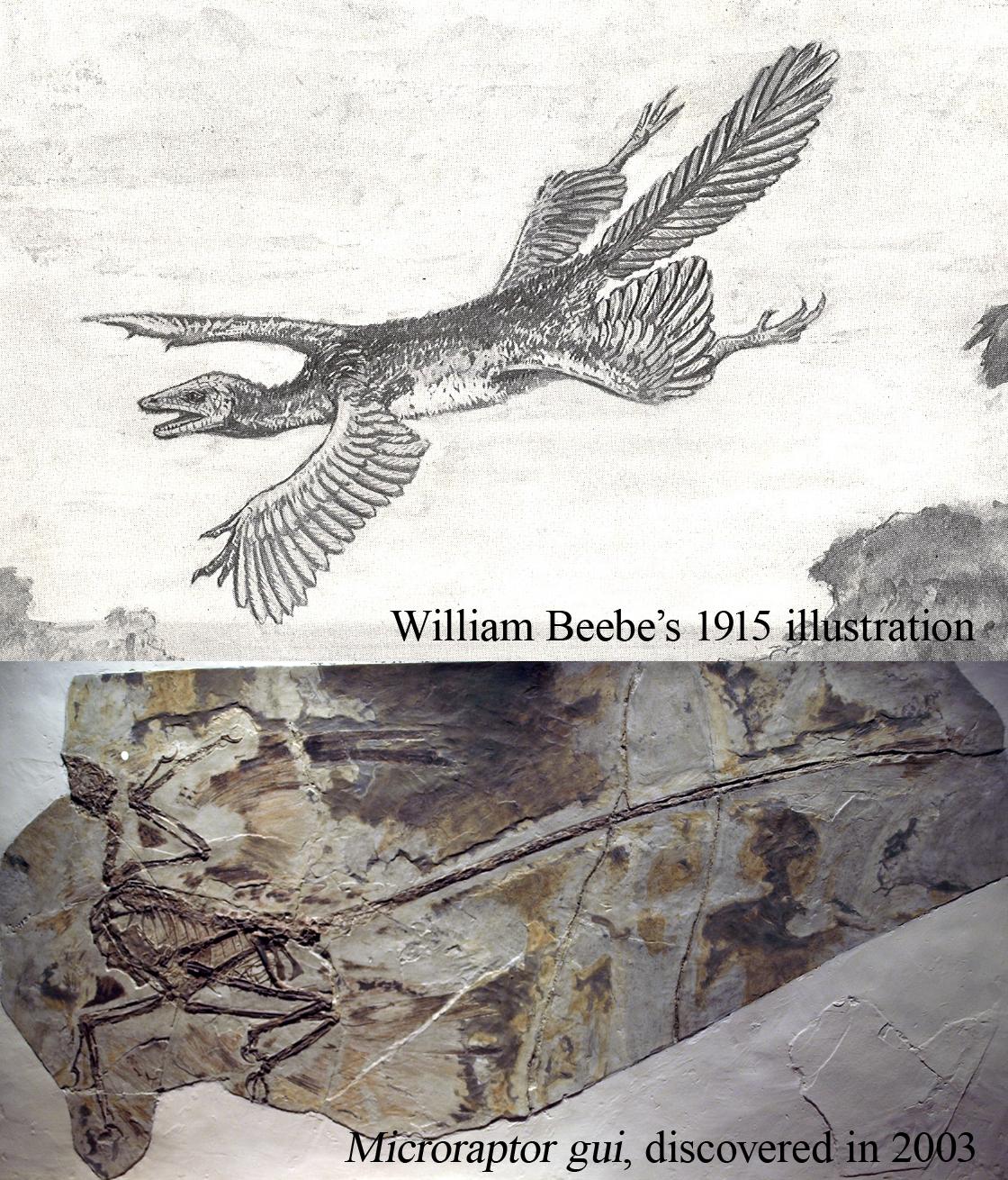 Willian Beebe's prediction by Agahnim