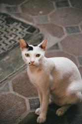 Dubai2-cat1 by De-Profundis