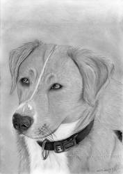 Abby - Commission Drawing by mrs-creative