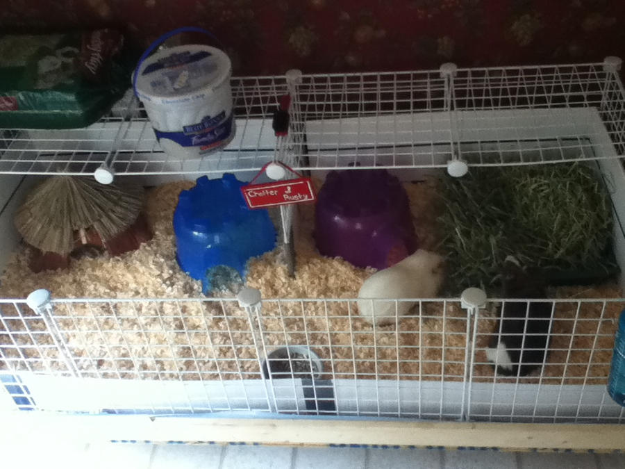 Guinea pig cage by piggypotter on deviantart for Buy guinea pig cage