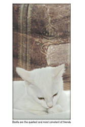 Book Kitten