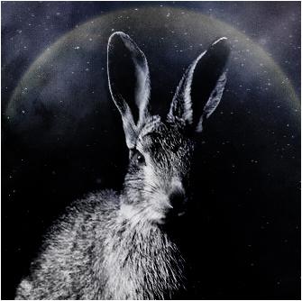 Flanblissim's Profile Picture