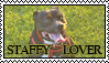 Staffy-Lover-Stamp by BeatFreak1970