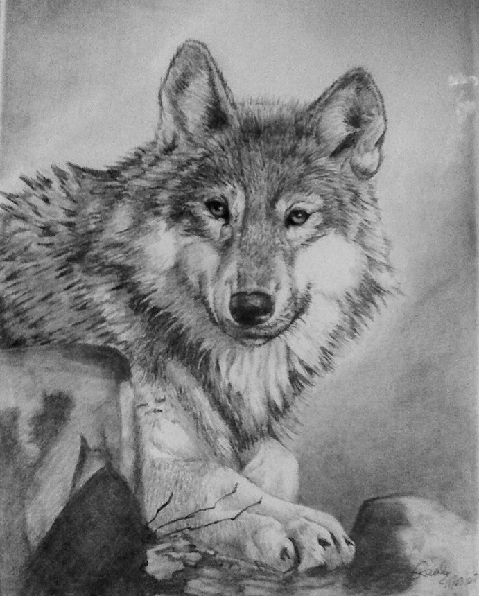 wolf drawing 5 days do you like it by xxxboastancoxxx