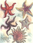 Day 14 Zooly - Seastar
