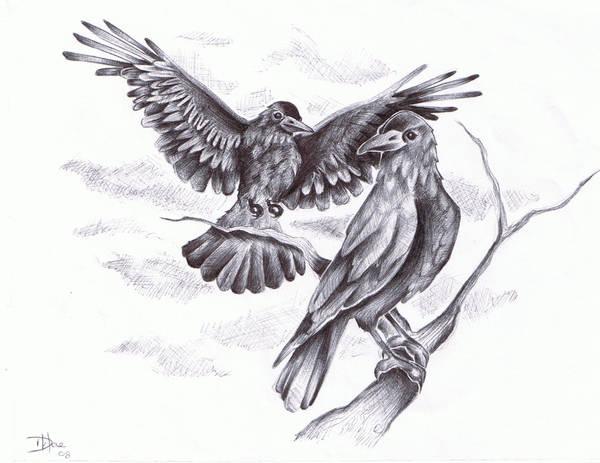 crows by daelin-reid