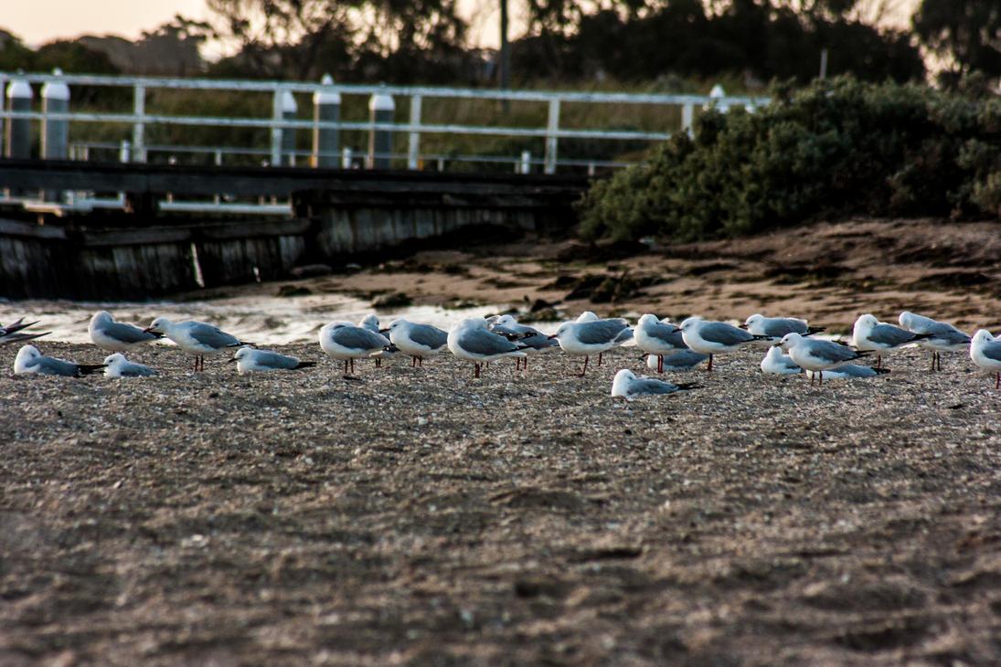 Seagulls by TomHorton100