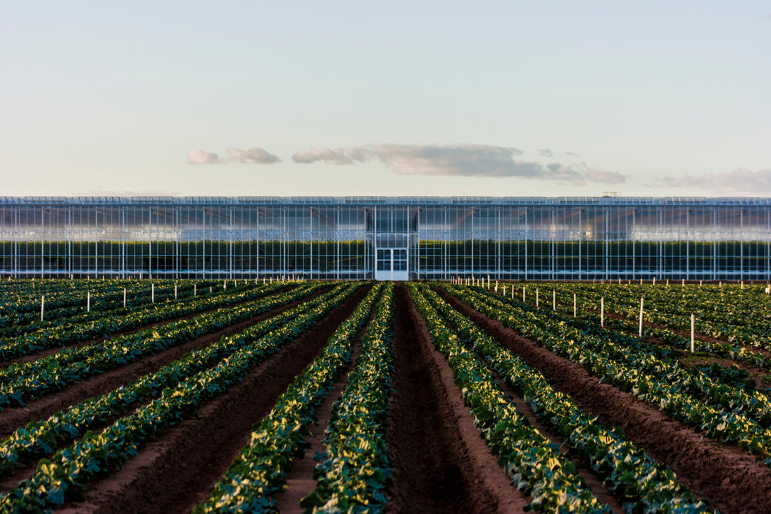 Greenhouse by TomHorton100