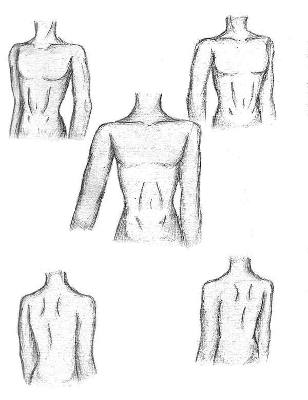 Male Anatomy by CelestialWhiteRose on DeviantArt