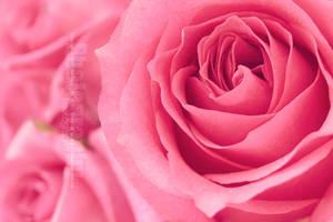 Ma Vie En Rose by DeeMaaH