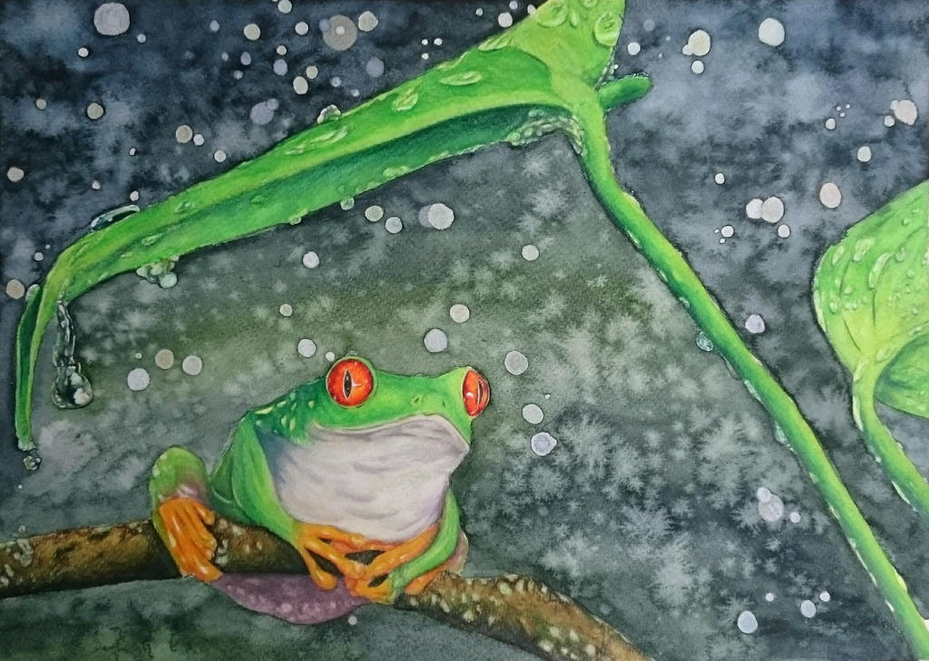 Frog in rain by Onyana