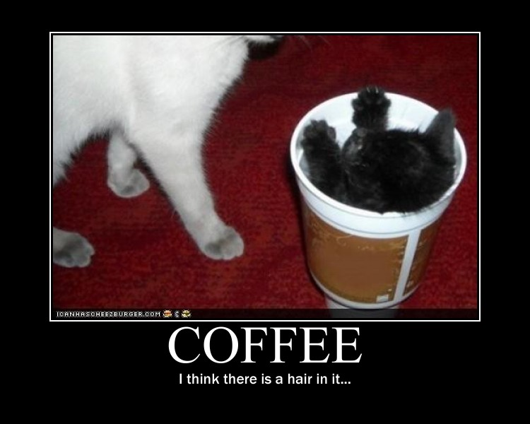 Coffee Cat motivational poster by Val30fDr3am5