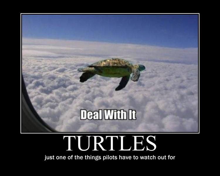 Flying turtle meme - photo#7