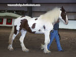bay paint mare 1