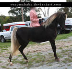 silver dapple rocky horse 4