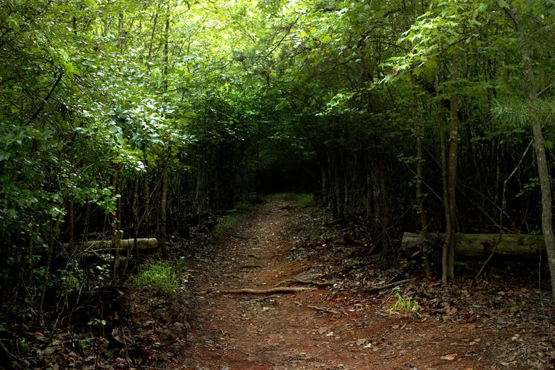 green forest path stock by venomxbaby