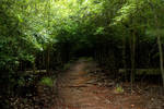 green forest path stock
