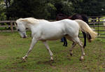 white paint mare 1