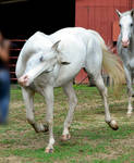 white paint mare 2