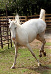 white paint mare 3