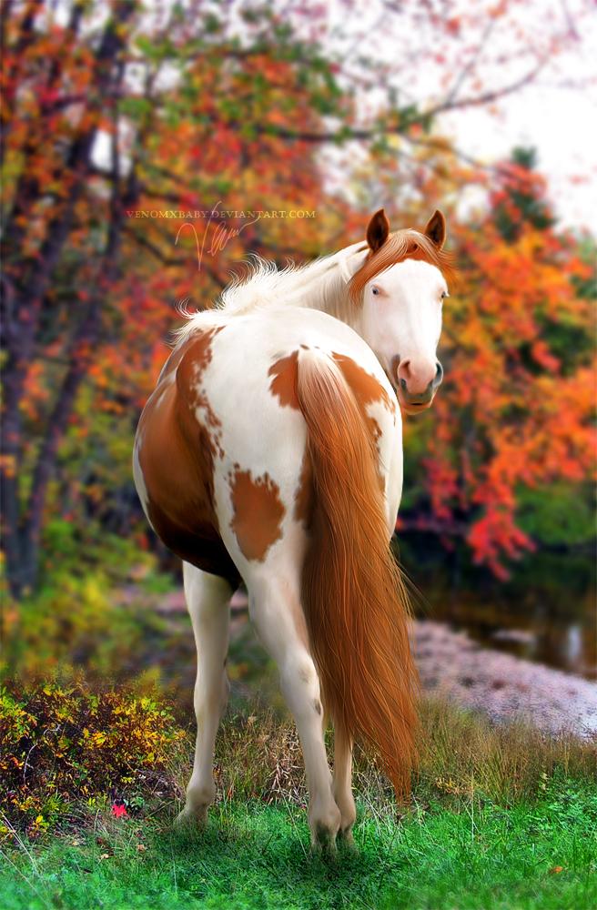 ^ Twilightstars ^ horses Autumn_song_by_venomxbaby-d31x8x8