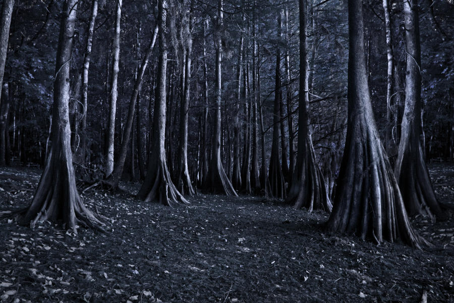 creepy trees stock