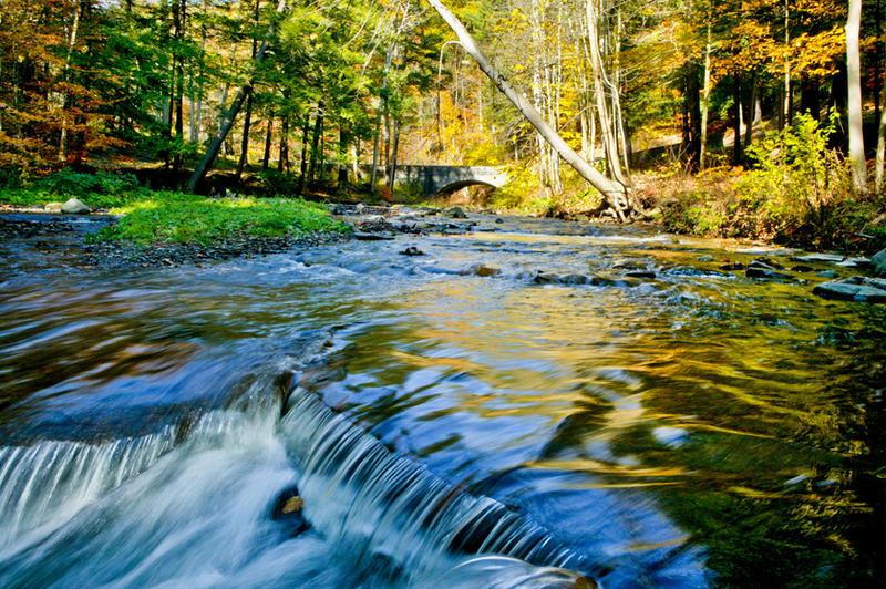 shady river stock bg by venomxbaby