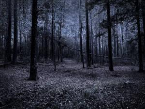 dark woods stock 1