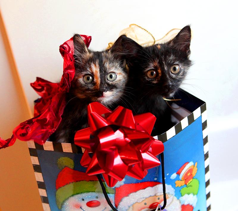 christmas kitties by venomxbaby