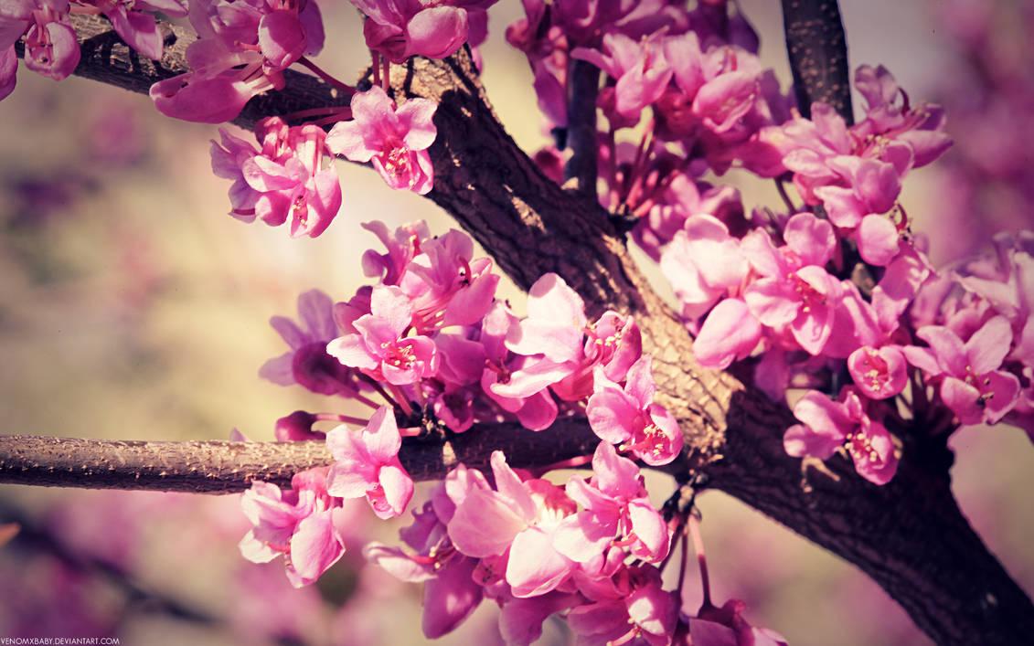 spring flowers wallpaper by venomxbaby