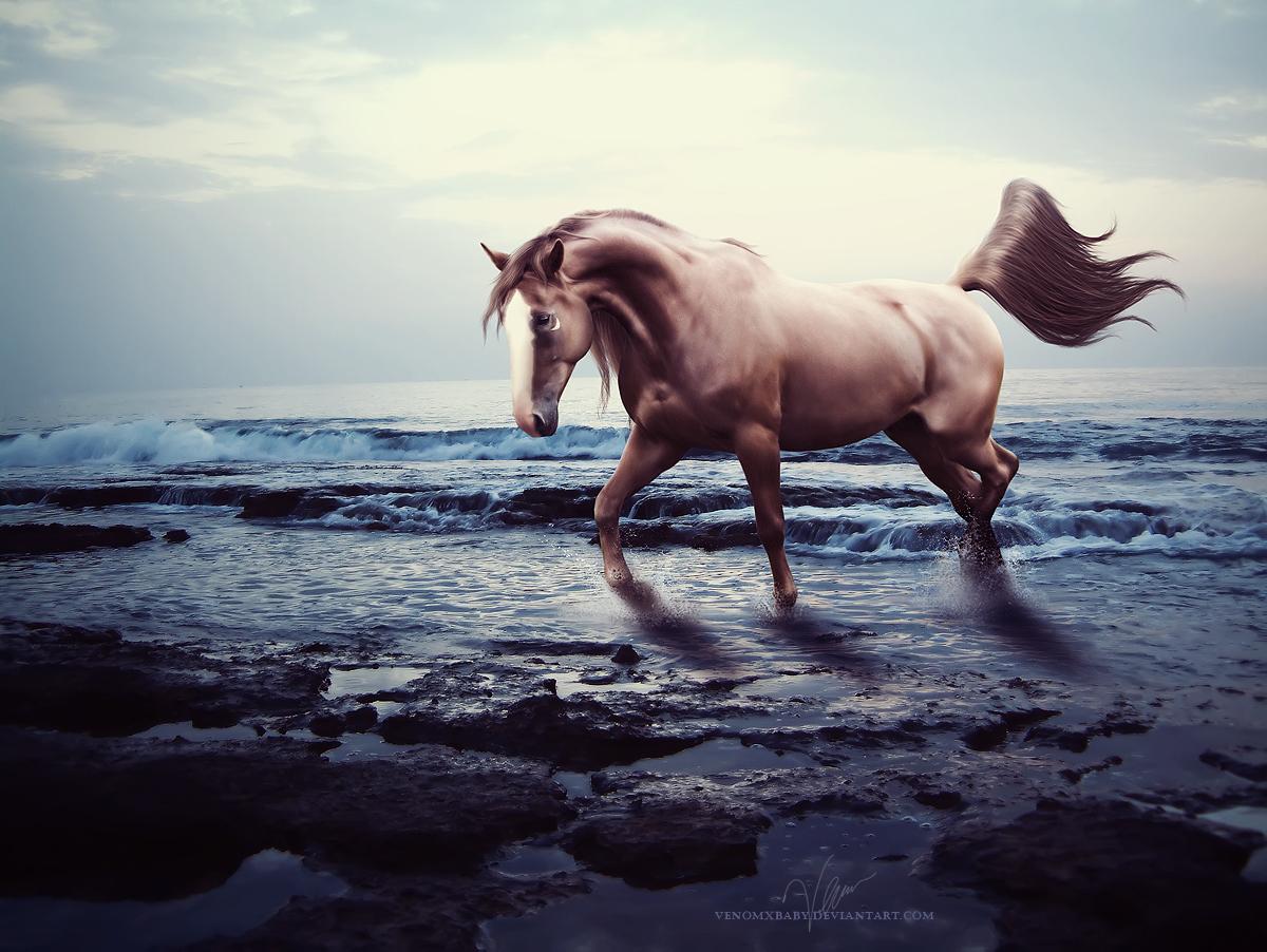 ^ Twilightstars ^ horses Tazo_by_venomxbaby-d3ddytw