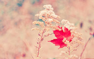 scarlet leaf wallpaper