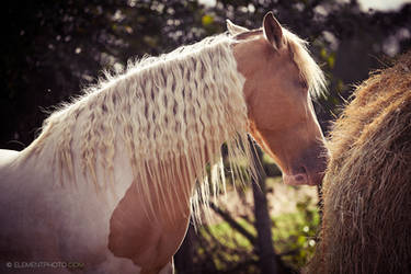 tennessee walker mare by venomxbaby