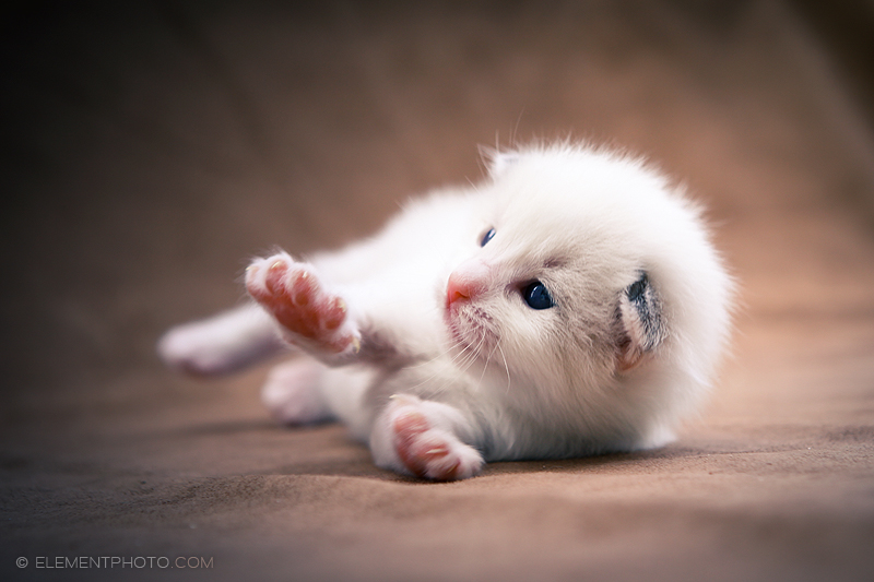 how to clean a newborn kitten