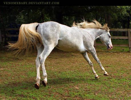 flying horse by venomxbaby