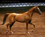 chestnut saddlebred 1