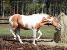 gold champagne stallion 3 by venomxbaby