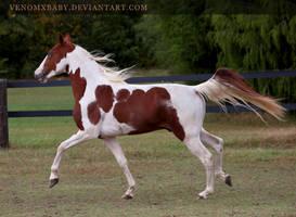chestnut paint stallion 3 by venomxbaby